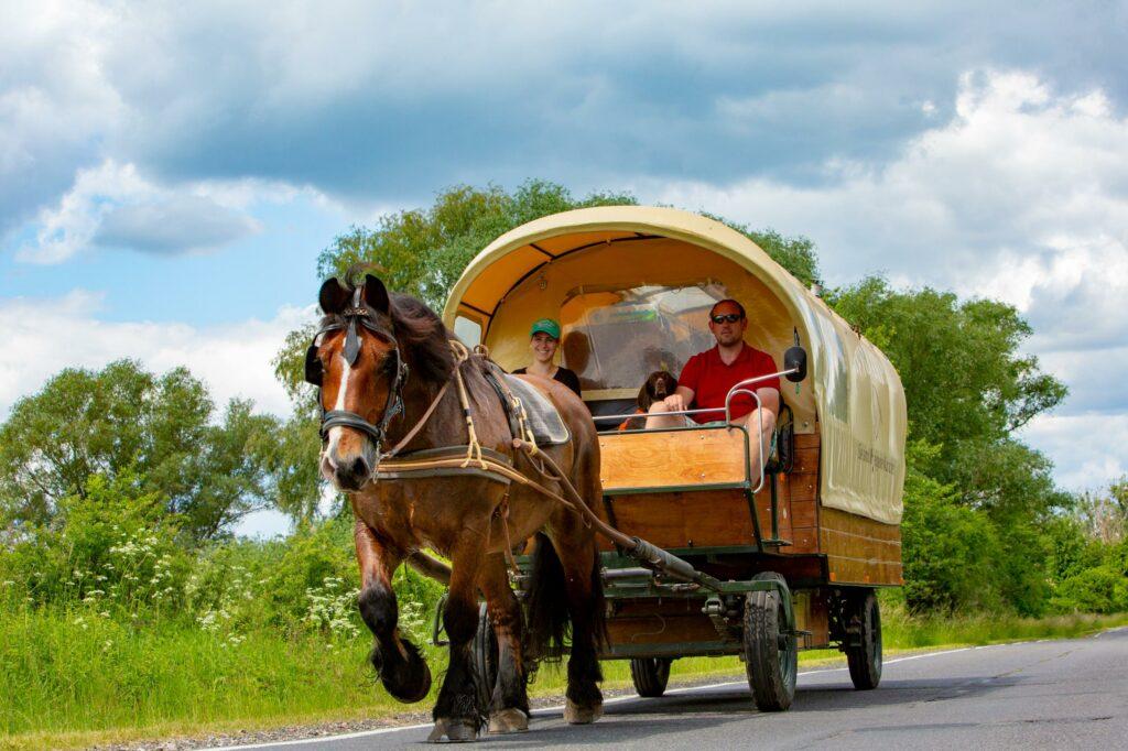 Pferd vor Planwagen